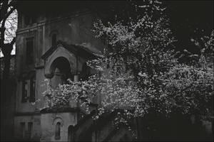 Umbra ramurei cu frunze clatinandu-se-n by AlexandrinaAna