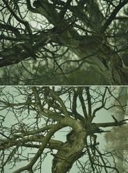 Perpetual desolation by AlexandrinaAna