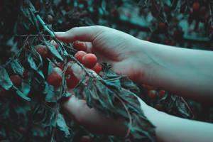 Blood feast by AlexandrinaAna