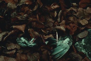 Wings of the fallen by AlexandrinaAna