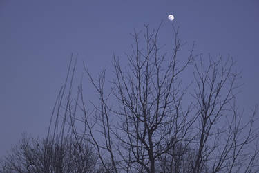 The return of the Moon by AlexandrinaAna
