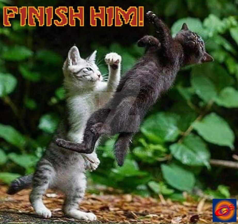 Mortal Kombat Kitties by KneelB4Zod71