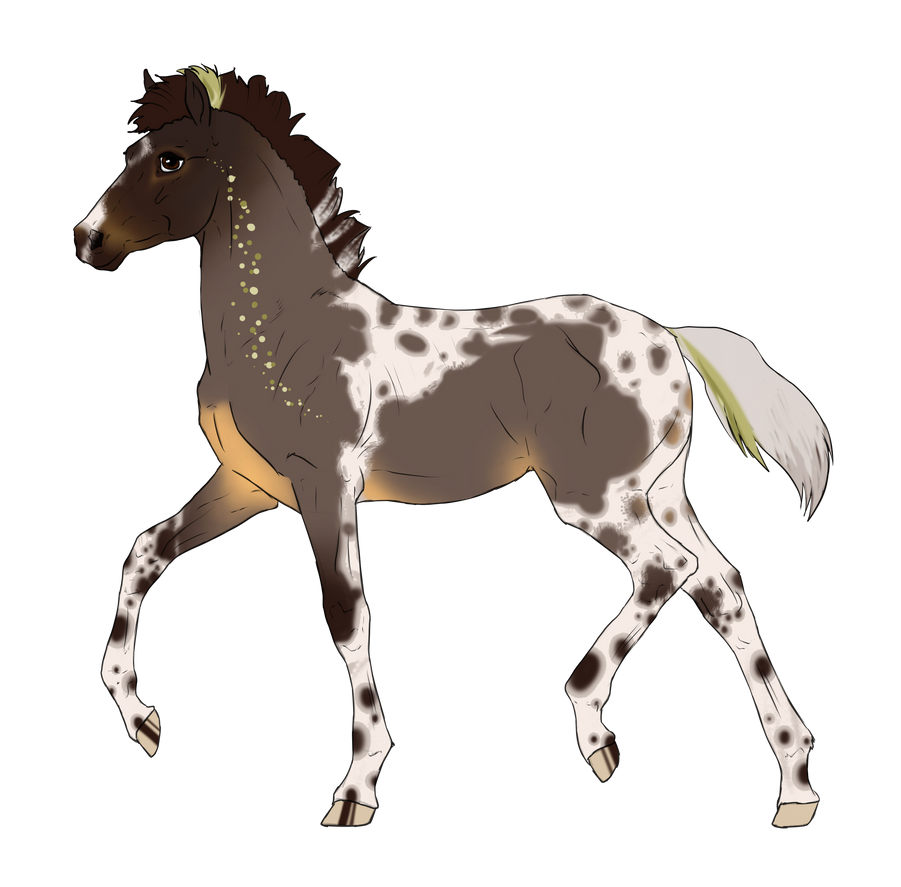 N2750 Padro Foal Design for xIcepelt by casinuba