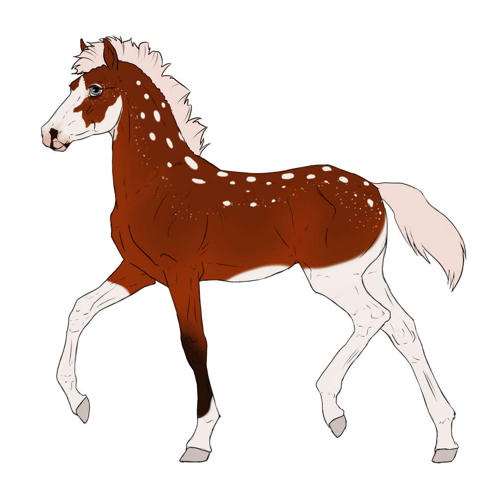 N2942 Padro Foal Design by casinuba