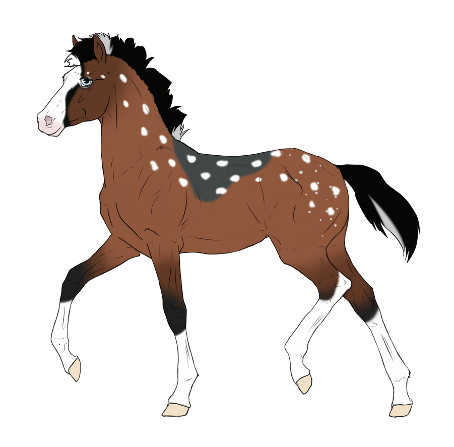 N2995 Padro Foal Design by casinuba