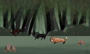 Forest explore 3