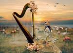 Harp, and flamingos