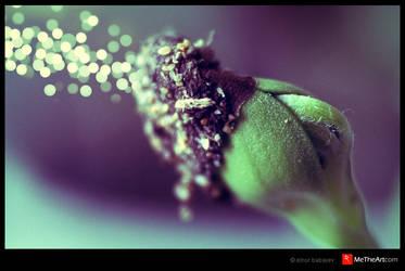 Seed the macro