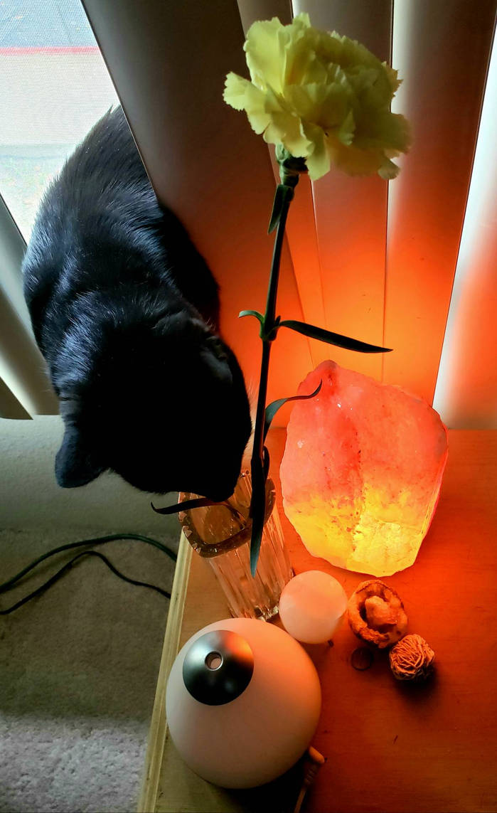 Of Cats and Altars by cometgazer379