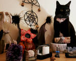 Of Cats and Altars