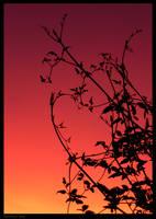 late summer sun by kureejiilea