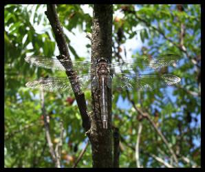 Mosaic Wings by kureejiilea