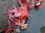 Fall Leafs by snazzyhopper