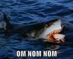 Shark Week 2013