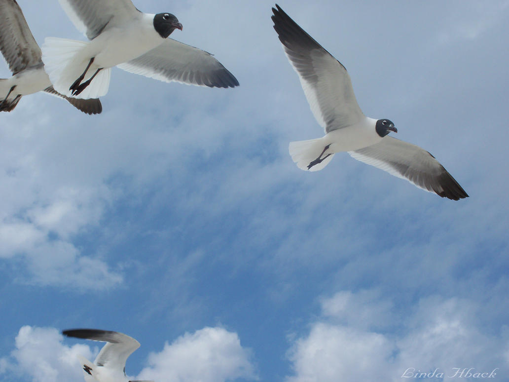 A Sea Gull's Sky by PlasmaJane
