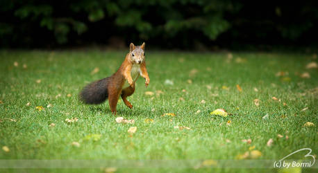 a tame squirrel