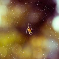 In spider's world by minastir