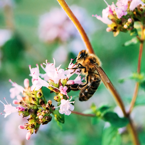 Bee by minastir