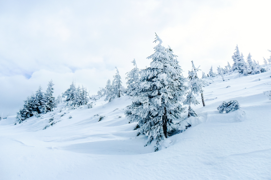 Winter wonderland by minastir