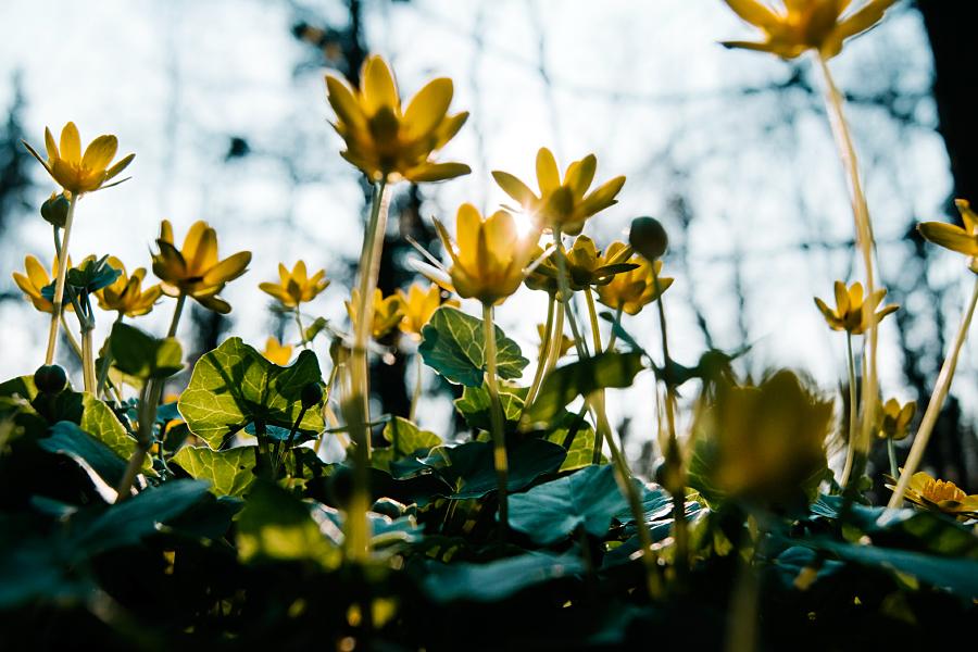 Spring is here II by minastir