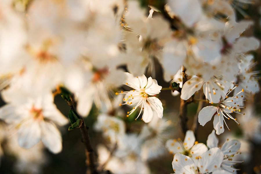 Spring is here III by minastir