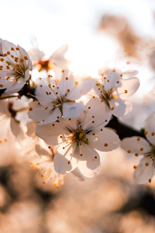 Spring is here IV by minastir