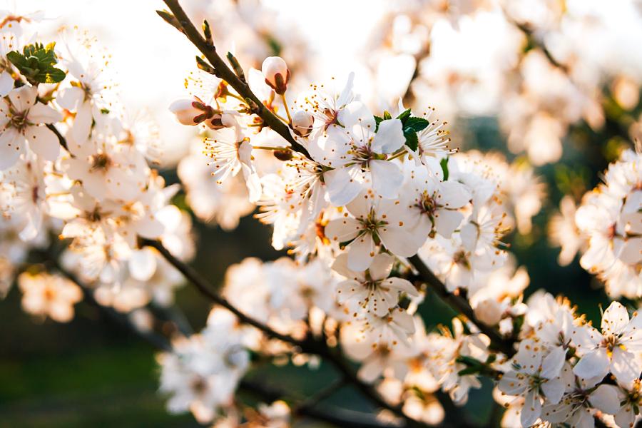 Spring is here V by minastir