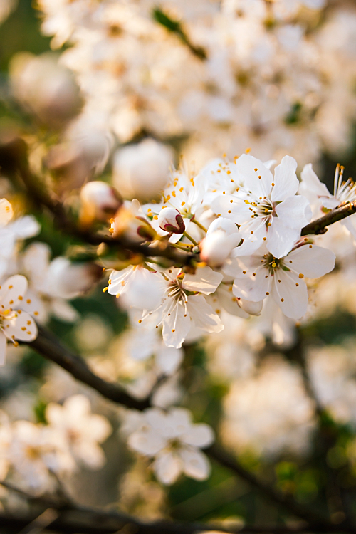 Spring is here VI by minastir