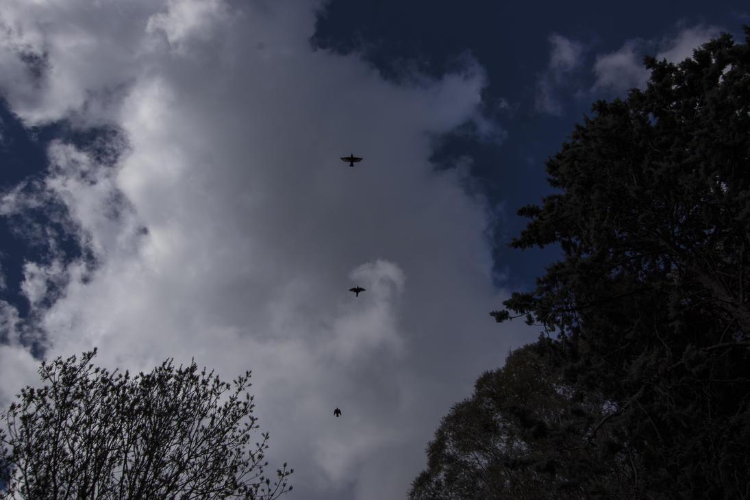 Birds over the sky by ildragocom