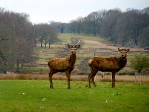 Deer oh Deer oh dear