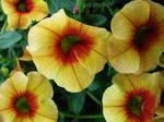 Tiny Flower Cluster