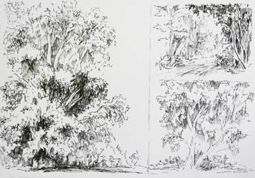 Trees by MonikaDomaszewska