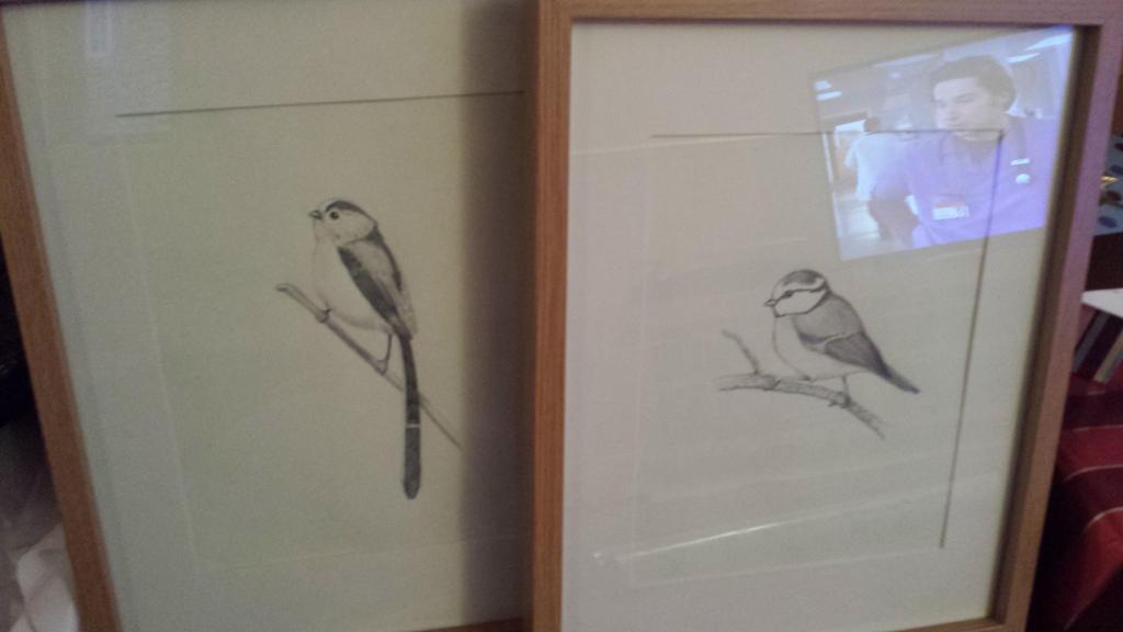 Birds by Tefu-Tefu