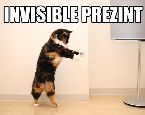 funny cats by 6574zetzu