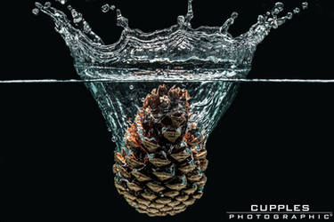 Pine Cone by cupplesey