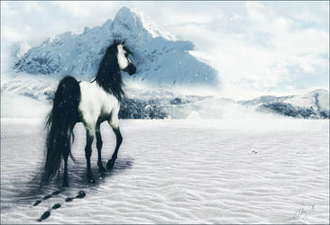 The White Dun Mare by kaons