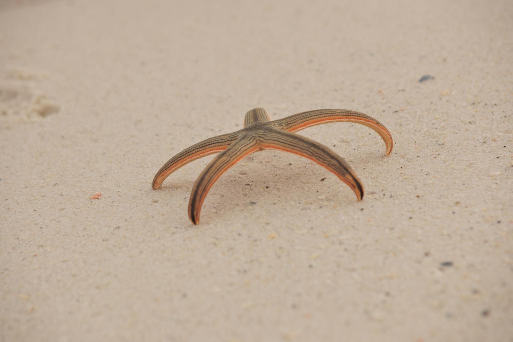 Starfish 1 by Schwartze