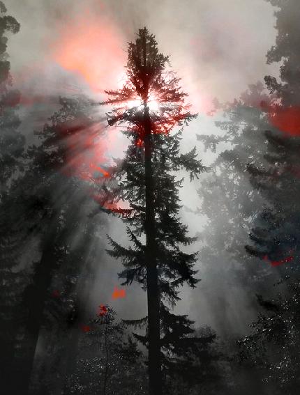 tree by Boojaybabe