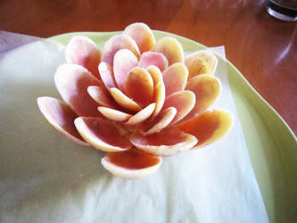 lotus chocolat blanc