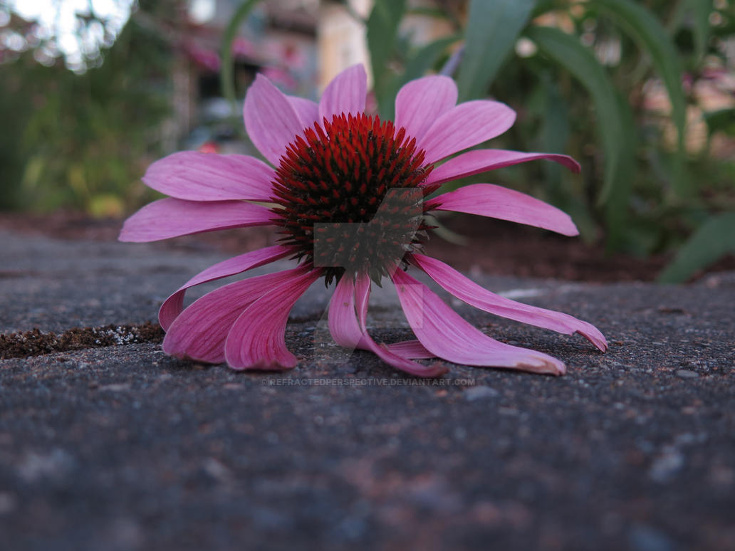 Flower by refractedperspective