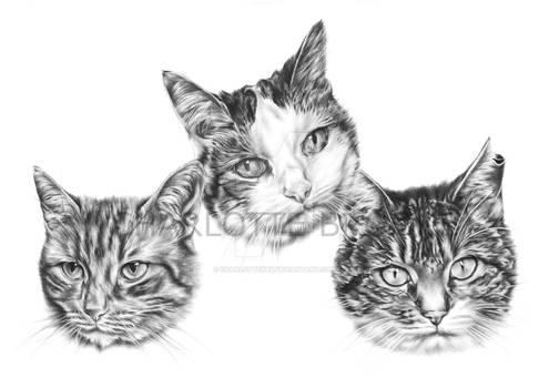 Sunny, Bella and Sydney
