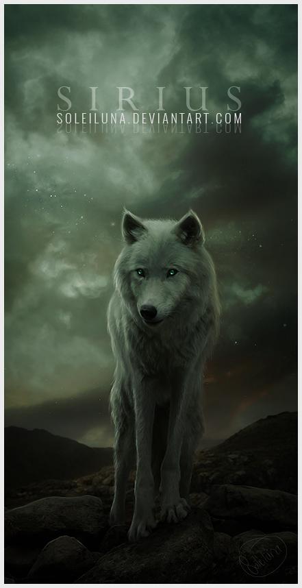 Sirius by Soleiluna
