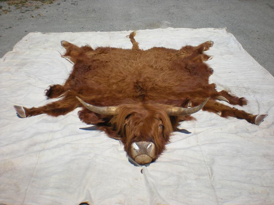 Highland Cow Rug Hootie By Minotaur