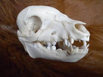 Piglet Skull by Minotaur-Queen