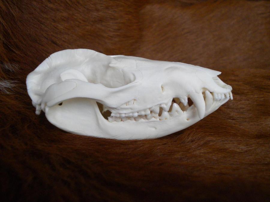Opossum Skull ref by Minotaur-Queen on deviantART