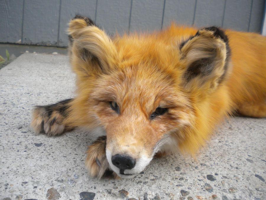 Red Fox Plush 2 by Minotaur-Queen