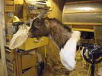 Goat Mount WIP