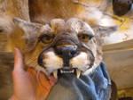 Cougar Headdress WIP
