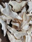 Jaw Bone Texture by Minotaur-Queen