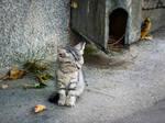 ...sleepy kitty, purr, purr, purr.